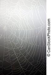 Cobweb - A photo of a cobweb with some interesting lighting...