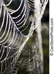 The nature of the web, drops of water.
