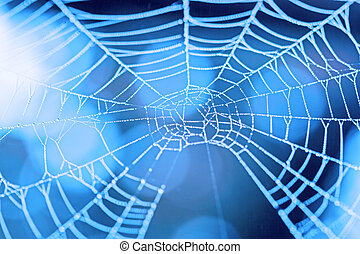Cobweb with dewdrops - Cobweb with dew drops in blue light....