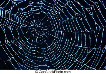 cobweb with glistening dewdrops - Close-up of the spider web...