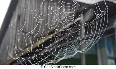 Cobweb with water droplets in rural areas.