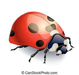 coccinella, isolato, illustrazione, realistico, vettore, white., rosso
