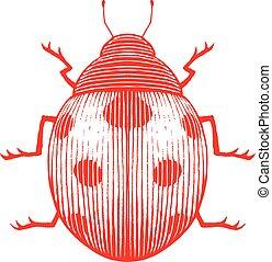 coccinella, schizzo, vectorized, illustrazione, inchiostro, rosso