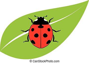 coccinella, vettore, foglia, verde rosso