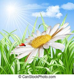 coccinella, vettore, margherita fiore
