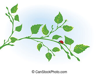 coccinelle, branche, bouleau