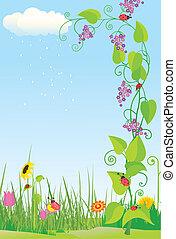 coccinelle, fiore, prato