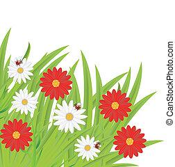 coccinelle, fiori