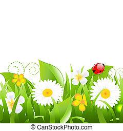 coccinelle, fleurs, herbe, pousse feuilles