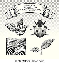 coccinelle, style, feuilles, scratchboard, dessins, encre