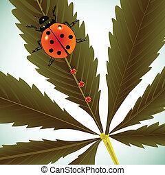 coccinelles, feuille, cannabis