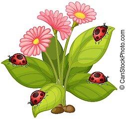 coccinelles, fleurs roses, feuilles, gerbera