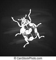 coccinellidae, icona