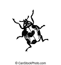 coccinellidae, icono