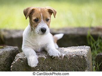 coccolare, addestramento, concetto, -, cucciolo, cane, dall'aspetto, a, suo, proprietario