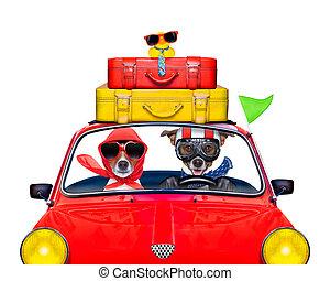 coche, perro, conducción
