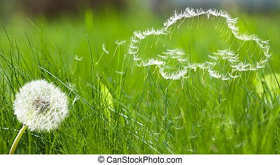 coche, vuelo, semilla, forma, dandelion's