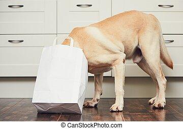 cocina, travieso, perro, hogar