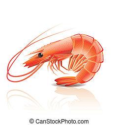 cocinado, blanco, aislado, camarón