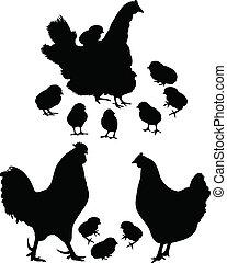 Cock a hen a chicken of a bird