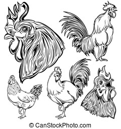 Cock Hand Drawn Set