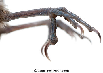 bird claw isolated