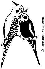 cockatiels, blanc, noir
