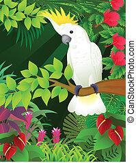 cockatoo  - Vector illustration of cockatoo bird