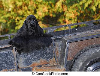 cocker spaniel in rusty trailer