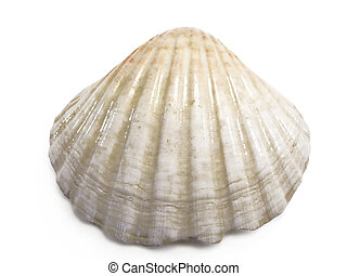 Cockle sea shell - half white/pink cockle sea shell isolated...