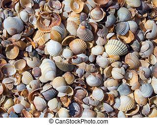 Cockleshell background - Cockleshell beach surface (sea-...
