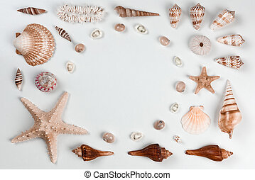 Cockleshell - Collection of cockleshells on white background...