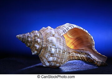cockleshell on a blue background