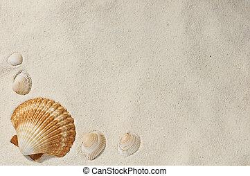 cockleshell on sand close up