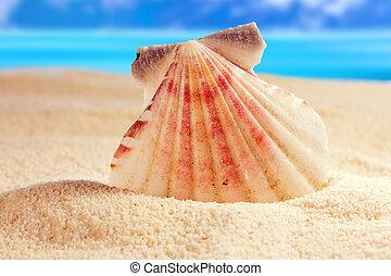 Cockleshell - Seashell on the sandy beach