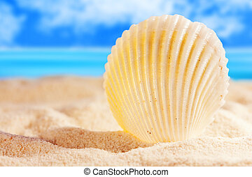 Cockleshell - Seashell on the sandy beach
