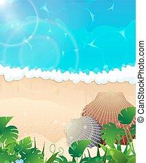 cockleshells, spiaggia, oceano