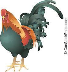 cockrel, pollo, ilustración