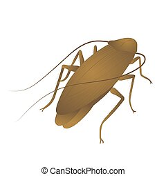 Cockroach color illustration isolated on white background.