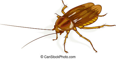 Cockroach. Vector illustration.