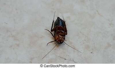 cockroach on the floor, insecticide