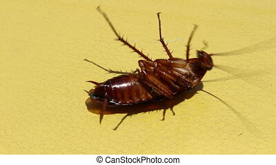 Cockroaches are die - Cockroaches are die after eating...