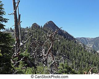 Cockscomb Peak Facing SSE