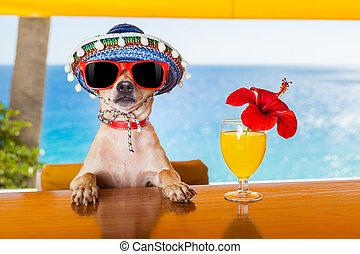 cocktail, dog