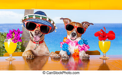 cocktail dogs - two funny dogs drinking cocktails at the bar...