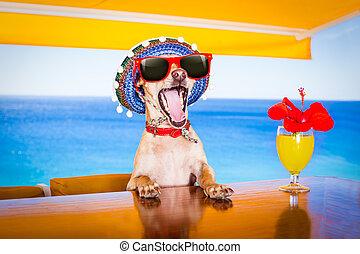 cocktail, getränk, hund, auf, sommer feiertag, urlaub, a, der, sandstrand, klub, bar