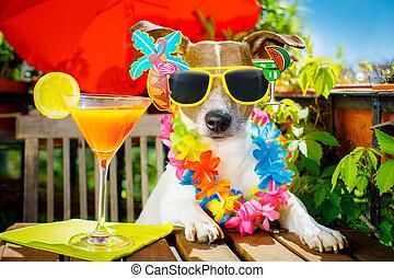 cocktail, getränk, hund, sommer feiertag, urlaub, auf, balkon