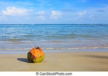 Cocktail in coconut on caribbean beach.