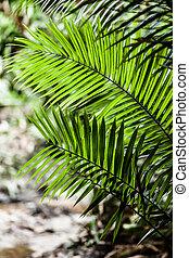 coco, árboles, en, el, caribe