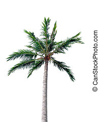 coco, branca, isole, fundo, árvores
